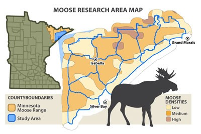 DNR wildlife researchers tackling moose mystery