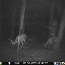 I have some Bucks coming in and hitting the Portage County Outdoors Track Hoe I won in the True Friends Outdoors Bow Giveaway. The one on the right is in the hole. Re-post lighted up image.