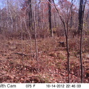 I was looking thru some trail cam pics from last fall that I thought were a complete loss... However, after further review...Three deer in this pic, including a buck. Can you see them?