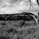 The old hanging tree....honestly, that IS what is used to be used for!